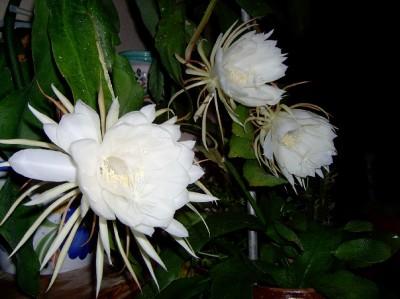 feliz lunes con flores